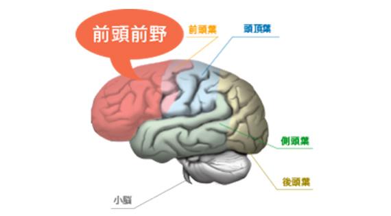 【画像】学習療法で鍛えられる脳のイメージ画像